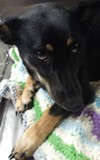 Bexy, a female shep mix, is also available for adoption.