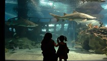 Talk Like a Pirate, Get $5 Off Greater Cleveland Aquarium Admission