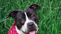 City Slashes Pet Adoption Fees for Holidays