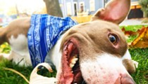 Akron Residents Apparently Don't Want to Go to Jail For Their Barking Dogs