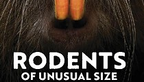 'Rodents of Unusual Size' Director to Participate in a Q&A at the Capitol Theatre