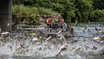 Pricetag of Asian Carp Defense Project Climbs to $778 Million