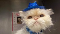 19-Year-Old Ohio Cat Becomes Internet Famous After Best Birthday Party