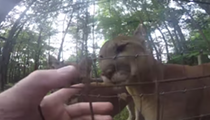 VIDEO: Ohio Man Jumps Fence at Columbus Zoo to Pet Cougars
