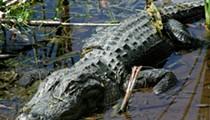 Alligator Uncovered in Cleveland Home, Owner Arrested