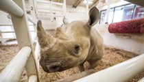 Baby Rhino Expected at the Cleveland Metroparks Zoo