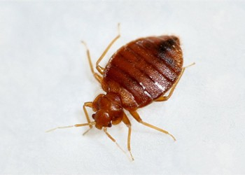 Cleveland Still Has the Worst Bed Bug Infestation Problem in the Country, Terminix Finds