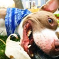 Lakewood Finally Ended Its Pit Bull Ban Last Night, New Breed Neutral Law Passed