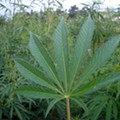 Ohio's Legalization of Hemp Complicates Probable Cause for Marijuana Charges
