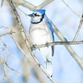 Ohio's Christmas Bird Count: 'There's a Lot to be Seen'