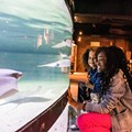 Greater Cleveland Aquarium to Again Team Up With United Black Fund for Annual MLK Day Celebration