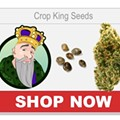 Seed Banks that Ship to USA: Busted for Ordering Seeds 2021 (Best Online Seed Bank)