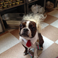 CLE Pets Will Help Dress Your Dog Like a Politician