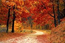 9ac21187_fall-autumn-red-season.jpg