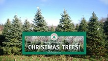 c535f4b4_christmas_trees_and_banner_heritage_farms_peninsula.jpg