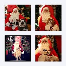 f0dd1b70_pet_photo_with_santa.jpg