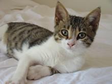cats_-_wiki.jpg