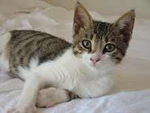 cat_photo_via_wikipeidia.jpg