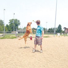 PHOTO BY HEATHER DIETZ - South Euclid Dog Park