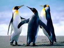 28532225_penguins.jpg