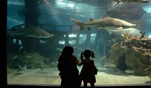 5cf410c7_17mothersday_aquarium.jpg