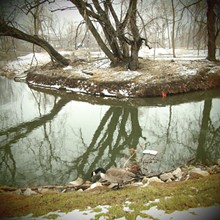 """Spring Snow at Euclid Creek: Goose with Styrofoam,"" by Michael Loderstedt"