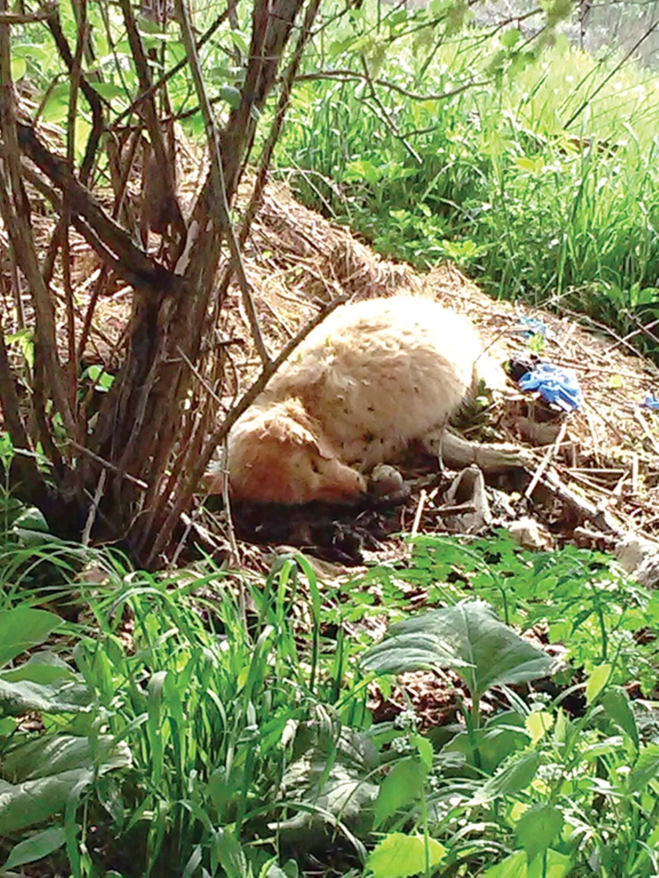 ohio u0027s dog breeding regulations aren u0027t solving the puppy mill