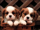cute-puppies-puppies-and-more-31104113-1024-768.jpg