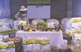 JEN BLATTY - Farmer D with his produce
