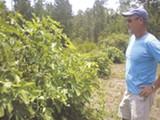 SUMMER TEAL SIMPSON - Michael Maddox surveys his handiwork in the garden