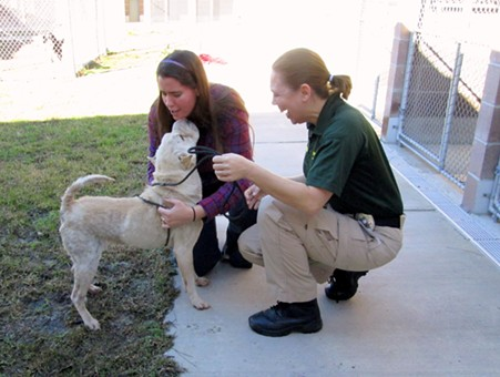 Pancake the Shar Pei greets her owner JoAnn Bradley at the Savannah-Chatham Metropolitan Police Department Animal Shelter with Animal Control Officer Christina Sutherin.