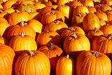 15086faf_fall-pumpkins-2.jpg