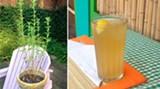 stevia-1-3.jpg