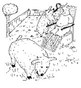 dope_080606_sheep.jpg