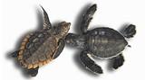 enviro-turtles-31.jpg