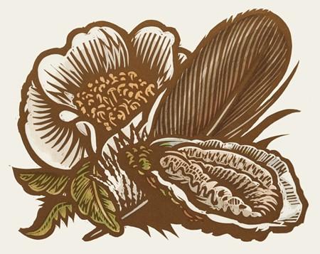 mazorra_georgia_oyster_feather_flower_2_.jpg