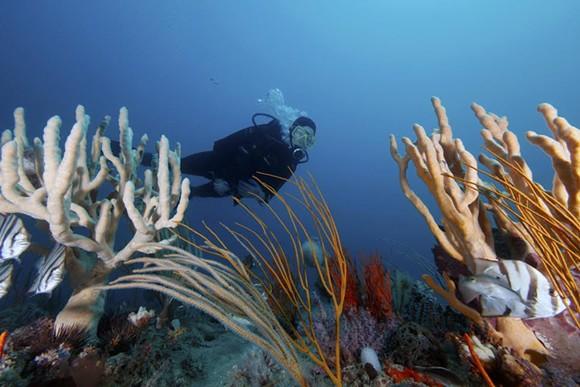 GRAYS REEF NATIONAL MARINE SANCTUARY/NOAA
