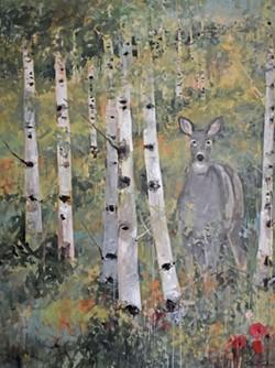 Doe In Aspen  Tree Grove, Wyoming.