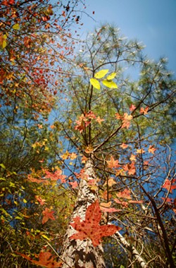 Janet S. Anderson's photo of leaves won honorable mention in the Ogeechee Riverkeeper photo contest. - JANET S. ANDERSON