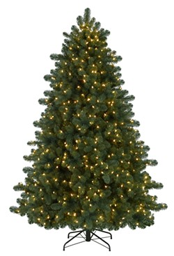 civil_society-tree.jpg