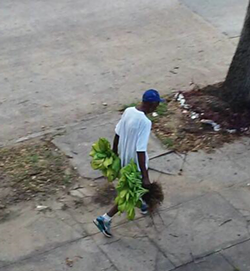 plant_thief_2.png