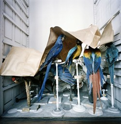 artbeat24-rross_museum_national_d_histoire_naturelle_paris_france_1982_1_.jpg