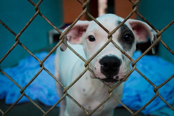 Animal Services says the proposed changes are meant to better protect public health and safety and promote the general welfare of citizens and animals in the county. - PHOTO BY JON WAITS