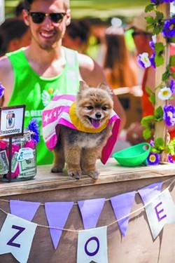 doggiecarnival-wildflower2-34.jpg