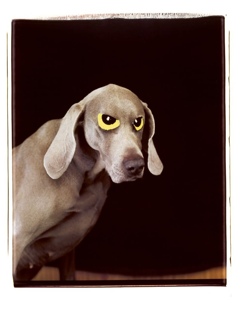 'Eye-on', 1997. William Wegman. Courtesy Sperone Westwater Gallery, New York.