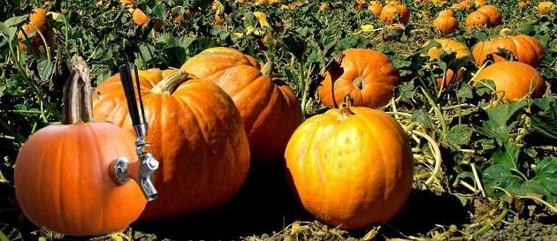 beer-connect_pumpkin.jpg