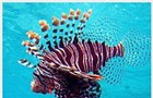 Film: Guy Harvey Expeditions: Sharks and Lionfish