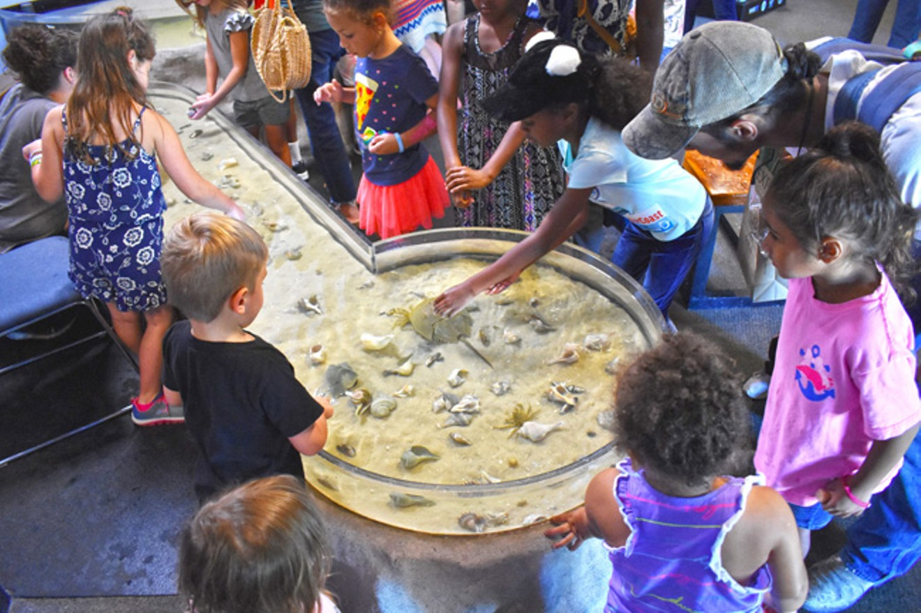 Touch tanks at the UGA Aquarium are always a popular activity at Skidaway Marine Science Day.