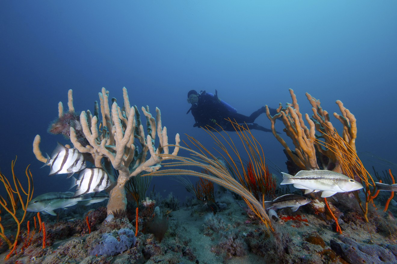 Diver at Gray's Reef National Marine Sanctuary