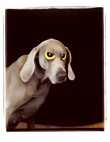 'Eye-on', 1997. William Wegman. Courtesy Sperone Westwater Gallery, New York.